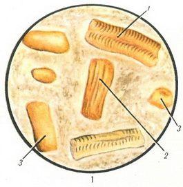 препарат от паразитов человека в аптеке