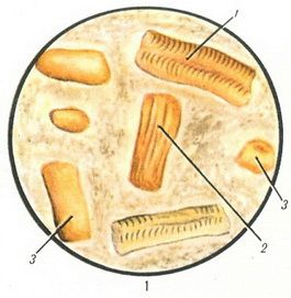 препарат от глистов азинокс