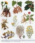 лекарственные растения в картинках