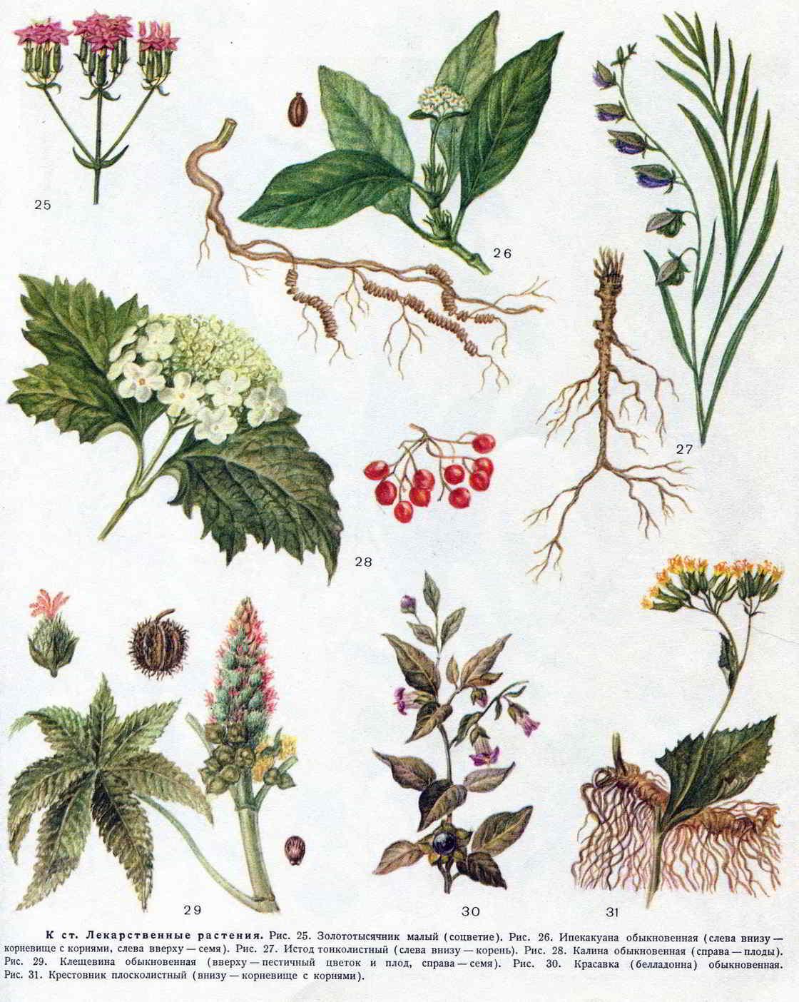 Передаточные растения