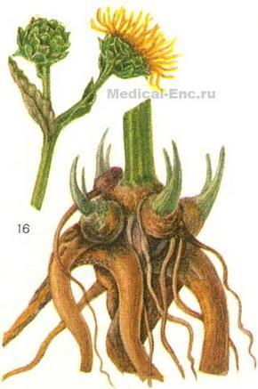 Растений с фото и названием
