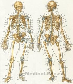 скачать скелет игру - фото 9