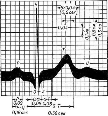 Электрокардиограмма здорового