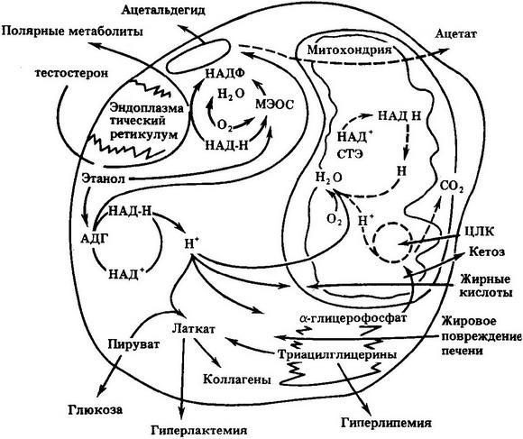 схема процессов окисления