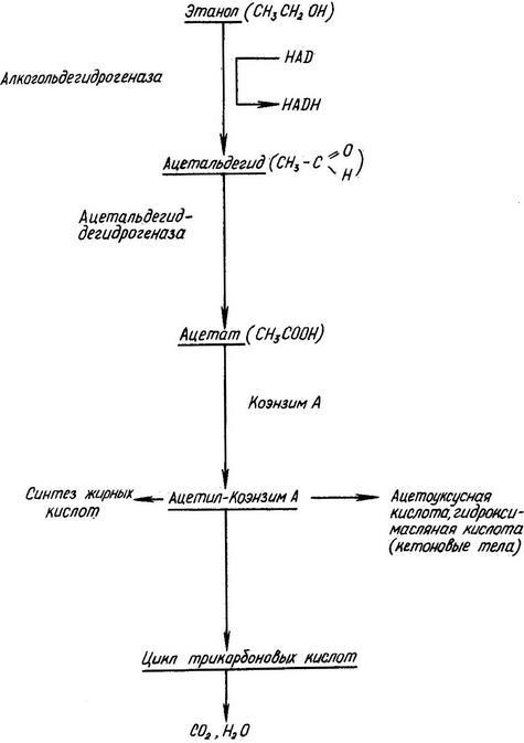 Схема окисления спирта