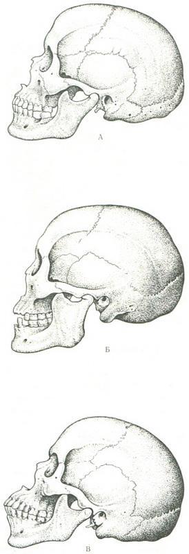 Негры особенности анатомии