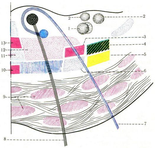 Схема расположения проводящих
