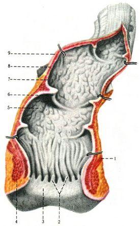 Физиотерапия при хронических простатитах