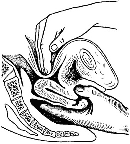 Пальцем Девственницу