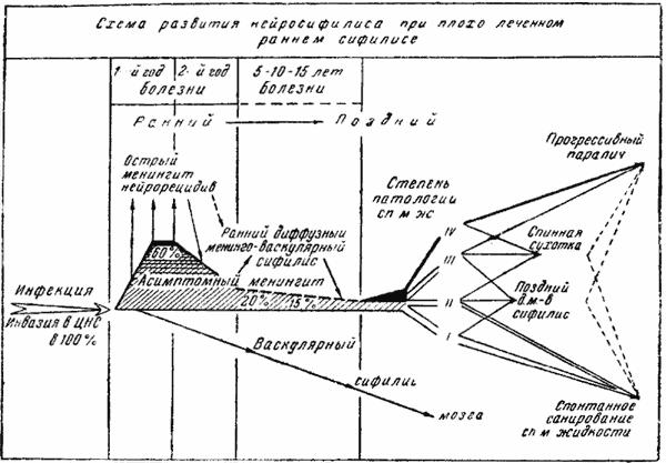 Схема развития нейросифилиса